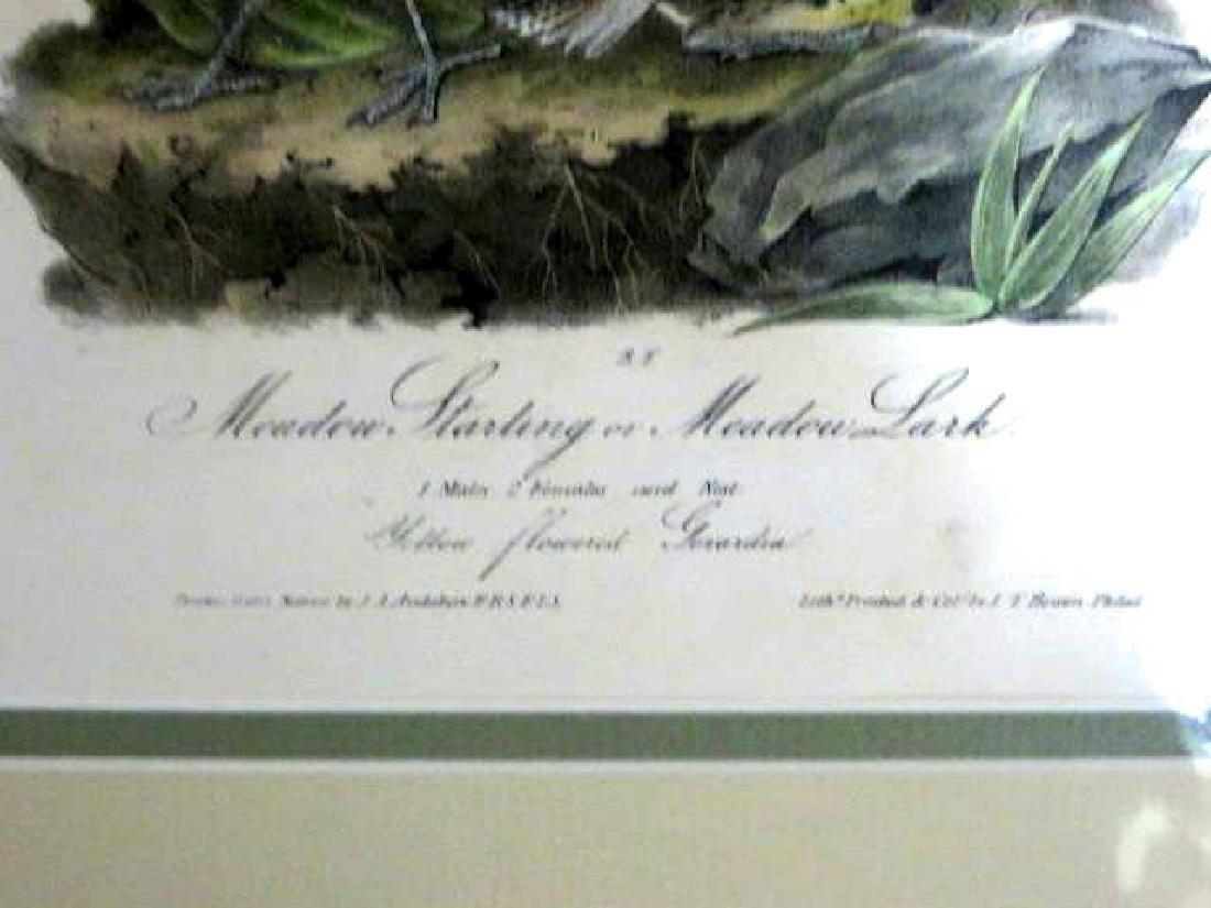 J.J. Audubon. Octavo. Meadow Starling or Meadow Lark - 2