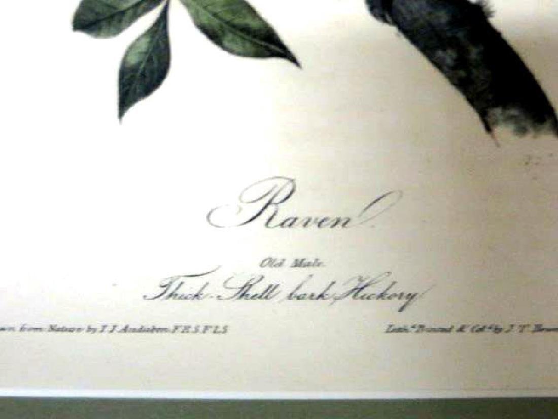 J.J. Audubon. Octavo. Raven No.224 - 2