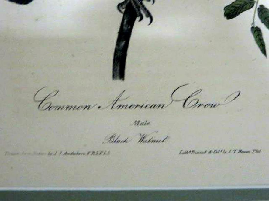 J.J. Audubon. Octavo. Common American Crow No.225 - 2