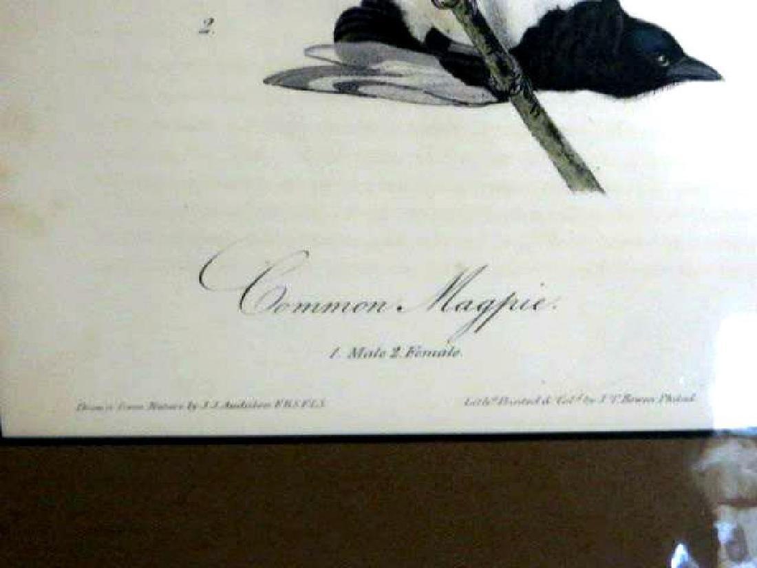 J.J. Audubon. Octavo. Common Magpie No.227 - 2