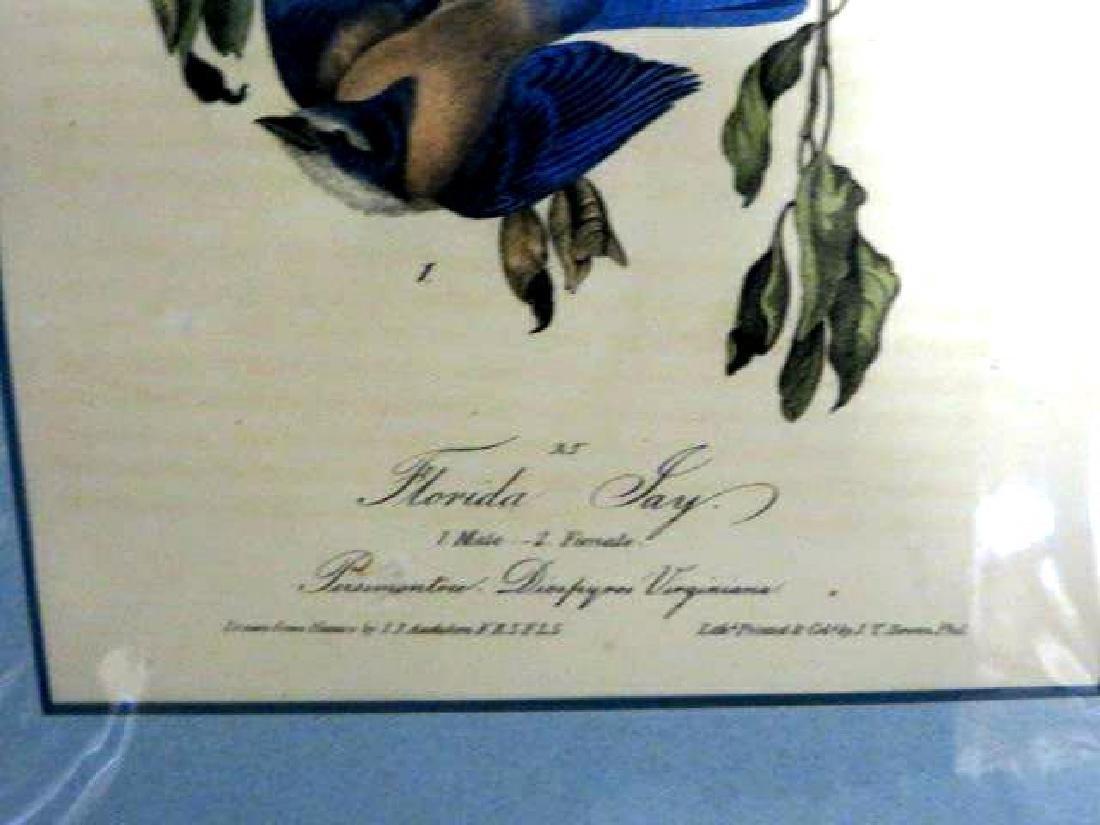J.J. Audubon. Octavo. Florida Jay No.233 - 2