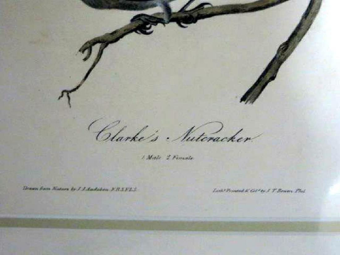 J.J. Audubon. Octavo. Clarke's Nutcracker No.235 - 2