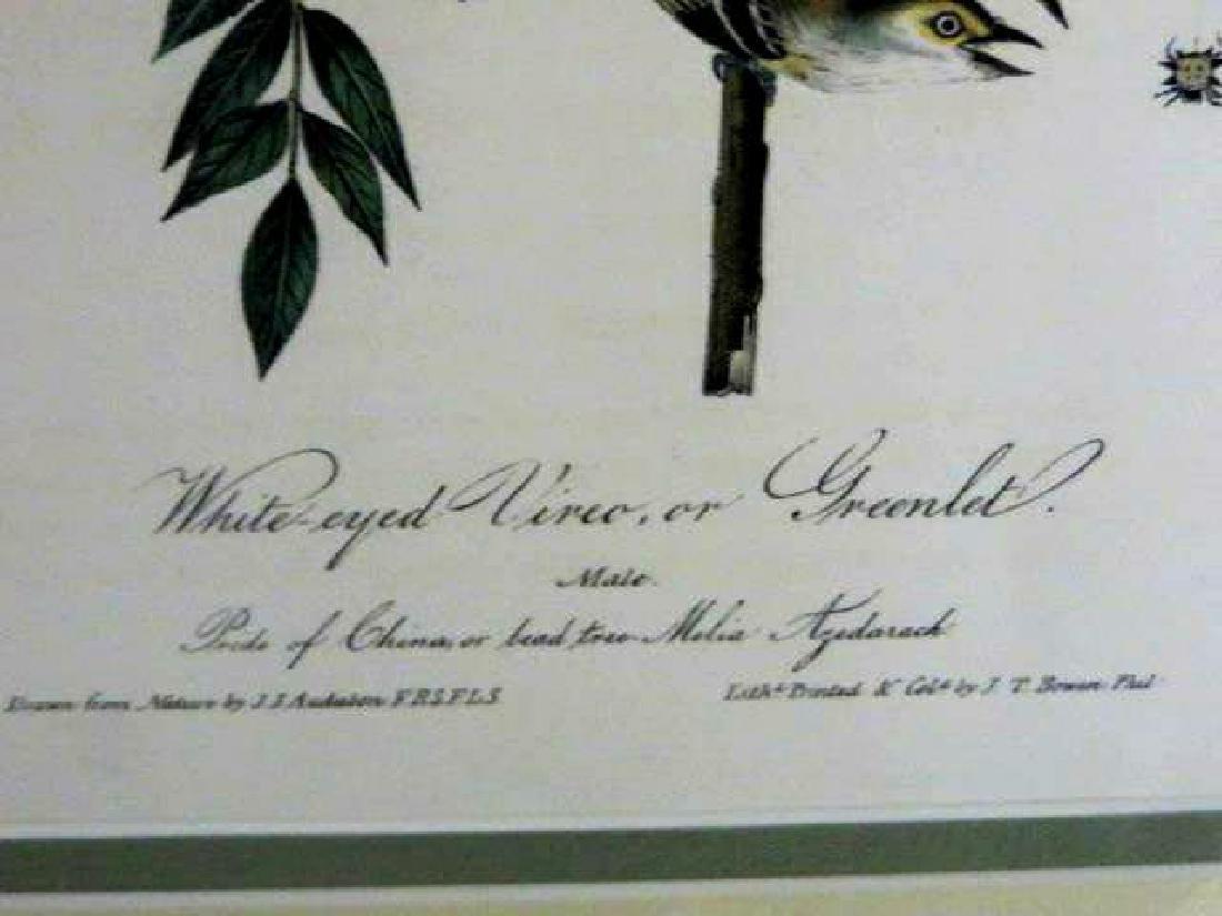 J.J. Audubon. Octavo. White Eyed Vireo Greenlet No.240 - 2