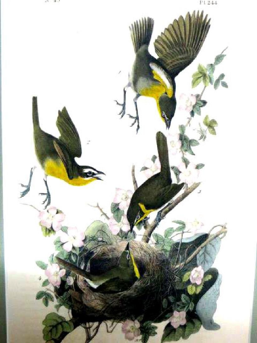 J.J. Audubon. Octavo. Yellow Breasted Chat No.244