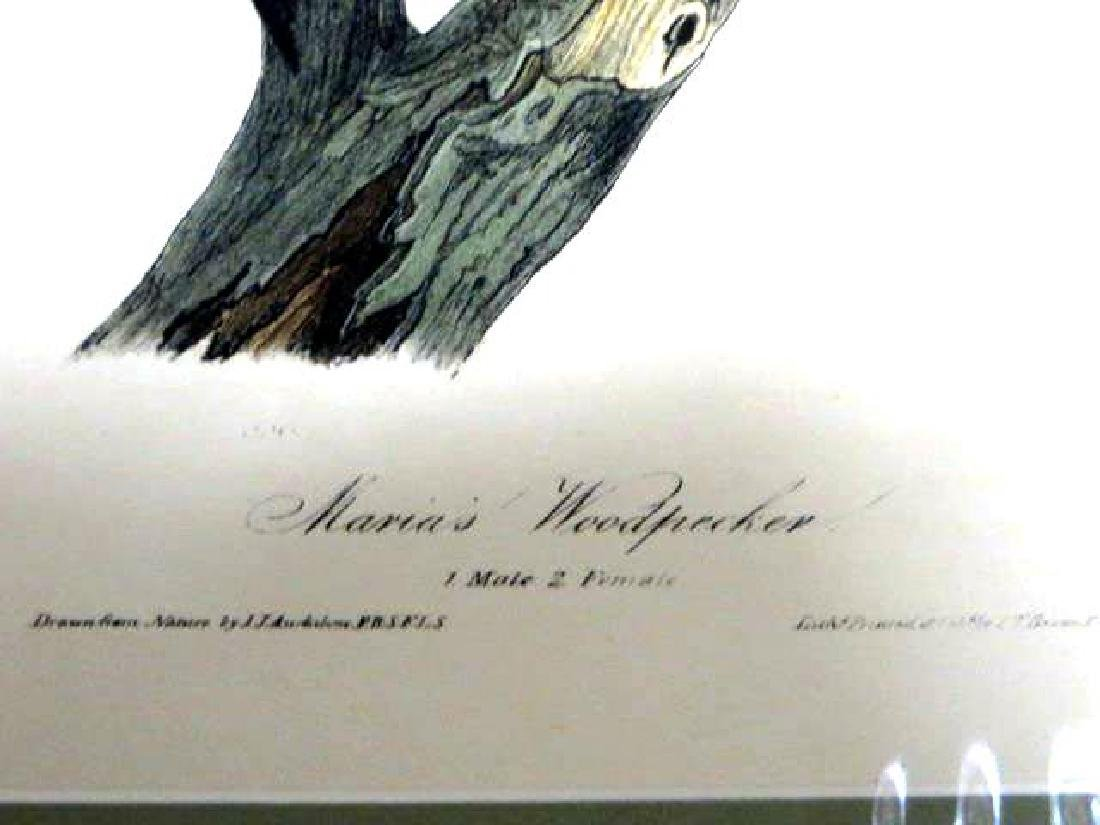 J.J. Audubon. Octavo. Marias Woodpecker No.260 - 2