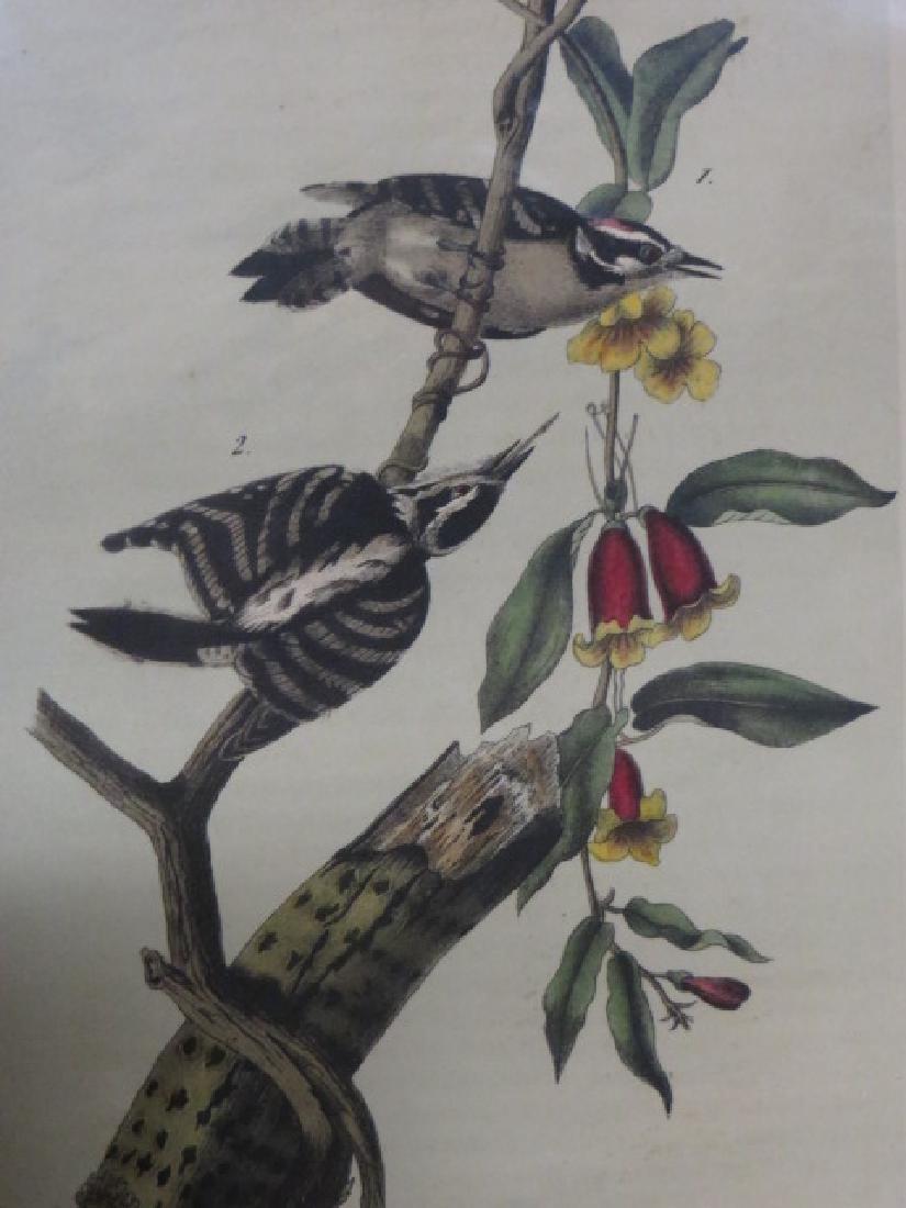 J.J. Audubon. Octavo. Downy Woodpecker No.263