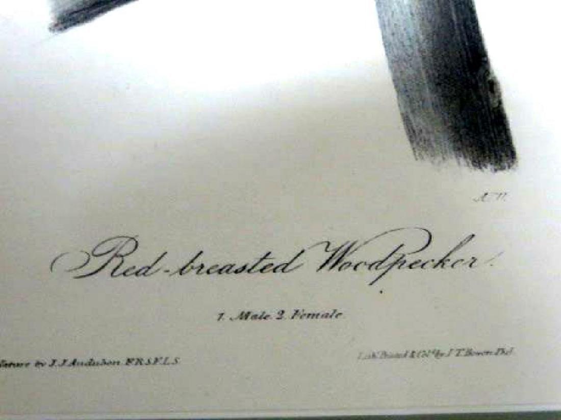 J.J. Audubon. Octavo. Red Breasted Woodpecker No.266 - 2