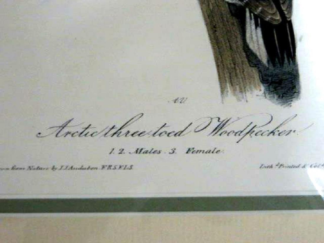J.J. Audubon. Octavo. Arctic Three-Toed Woodpecker - 2