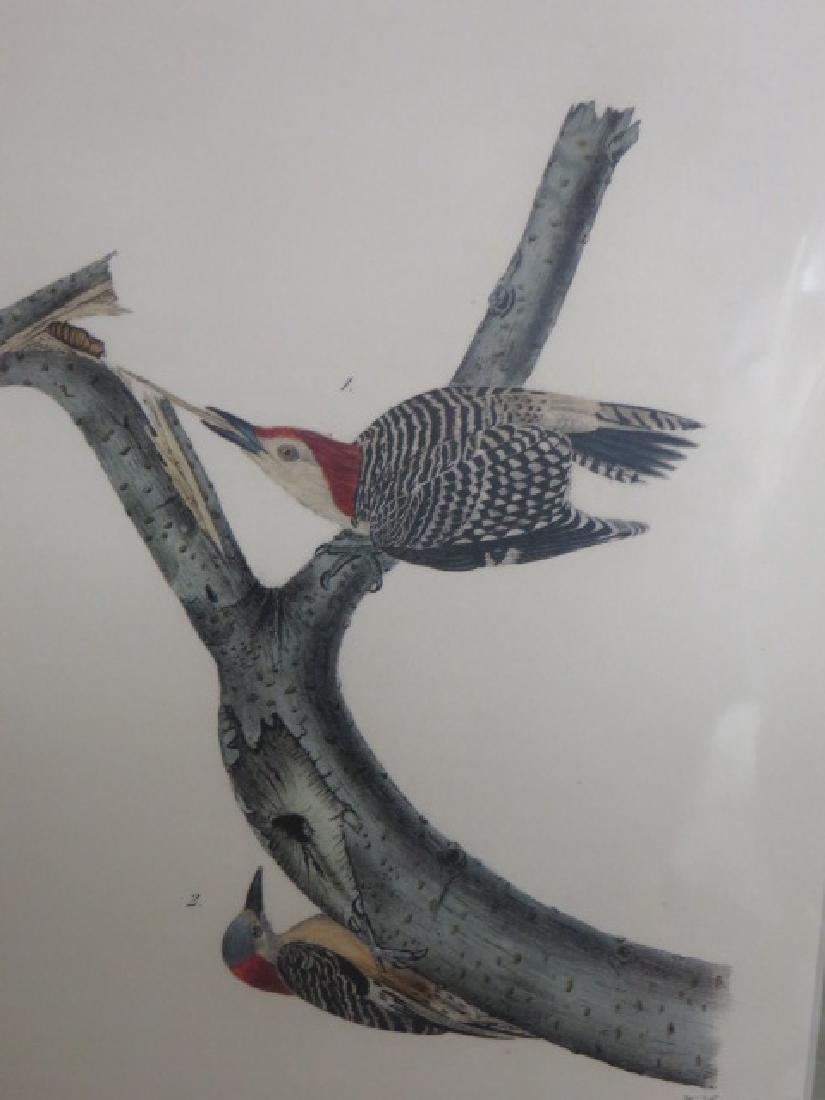 J.J. Audubon. Octavo. Red-Bellied Woodpecker No.270