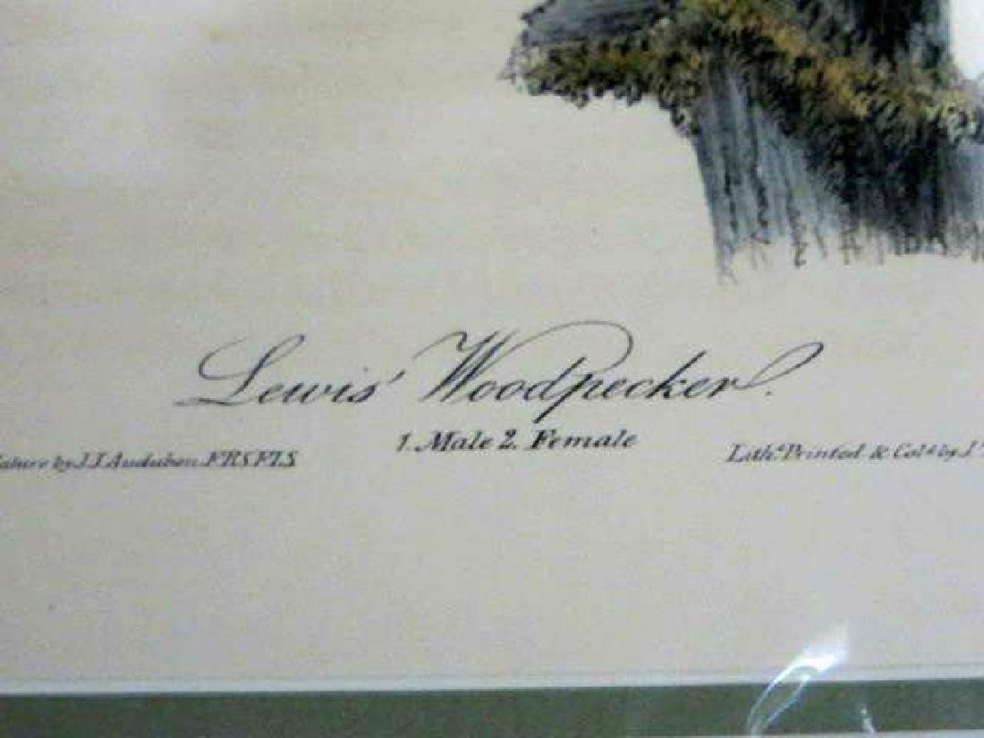 J.J. Audubon. Octavo. Lewis Woodpecker No.272 - 3