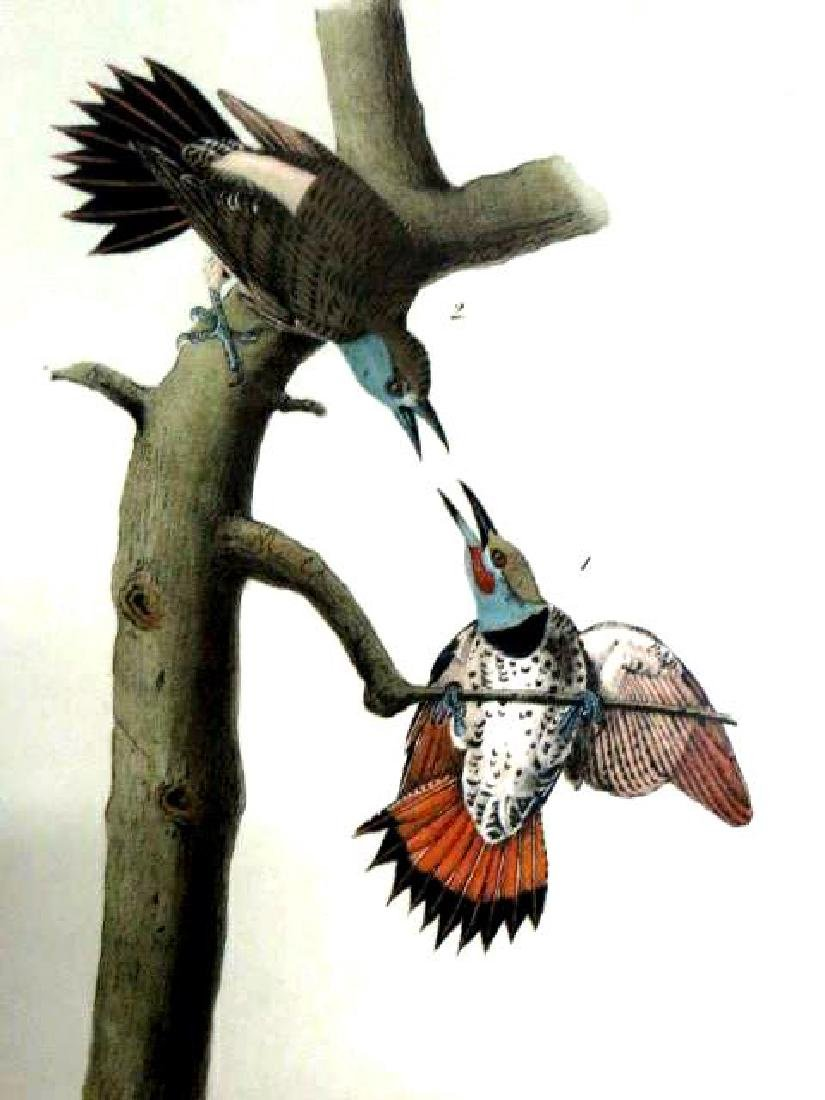 J.J. Audubon. Octavo. Red Shafted Woodpecker No.274