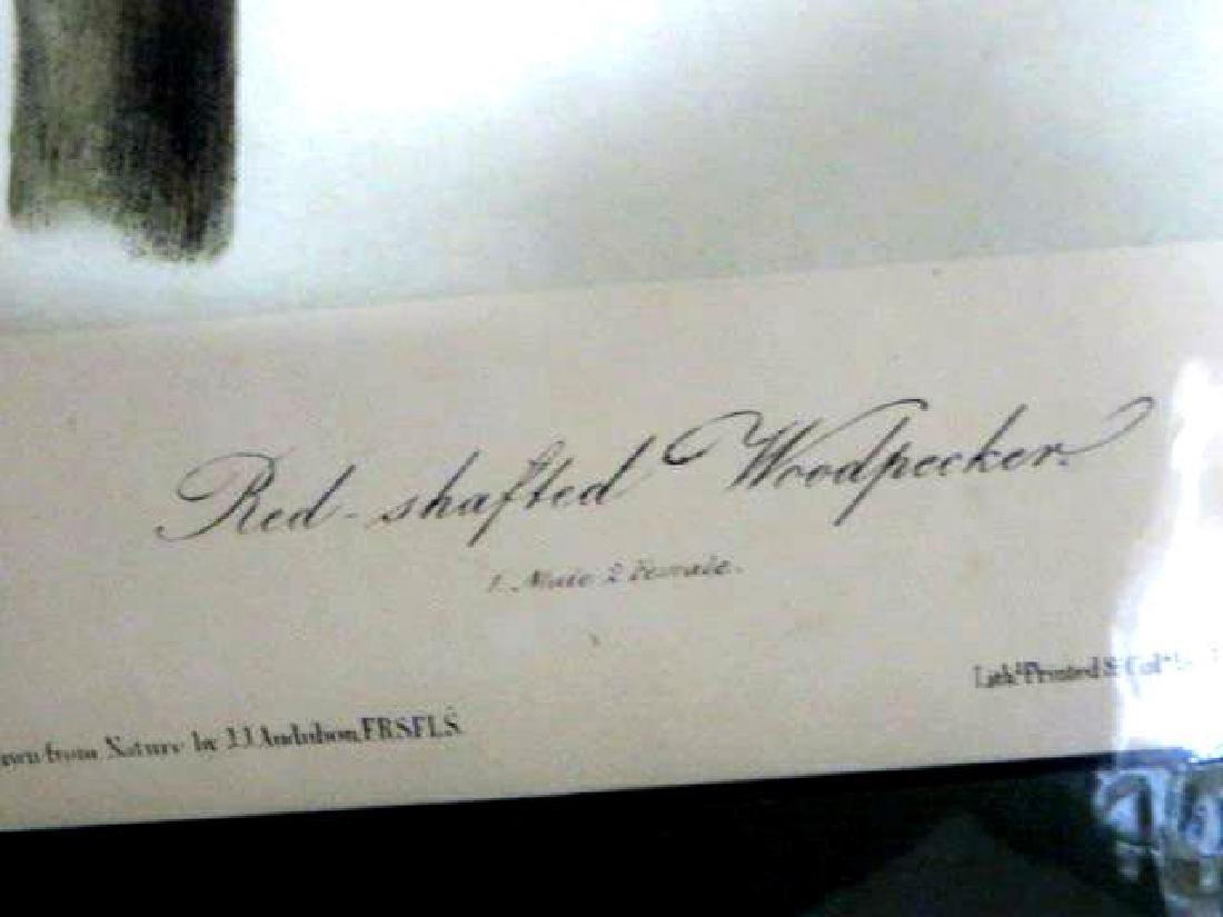 J.J. Audubon. Octavo. Red Shafted Woodpecker No.274 - 2