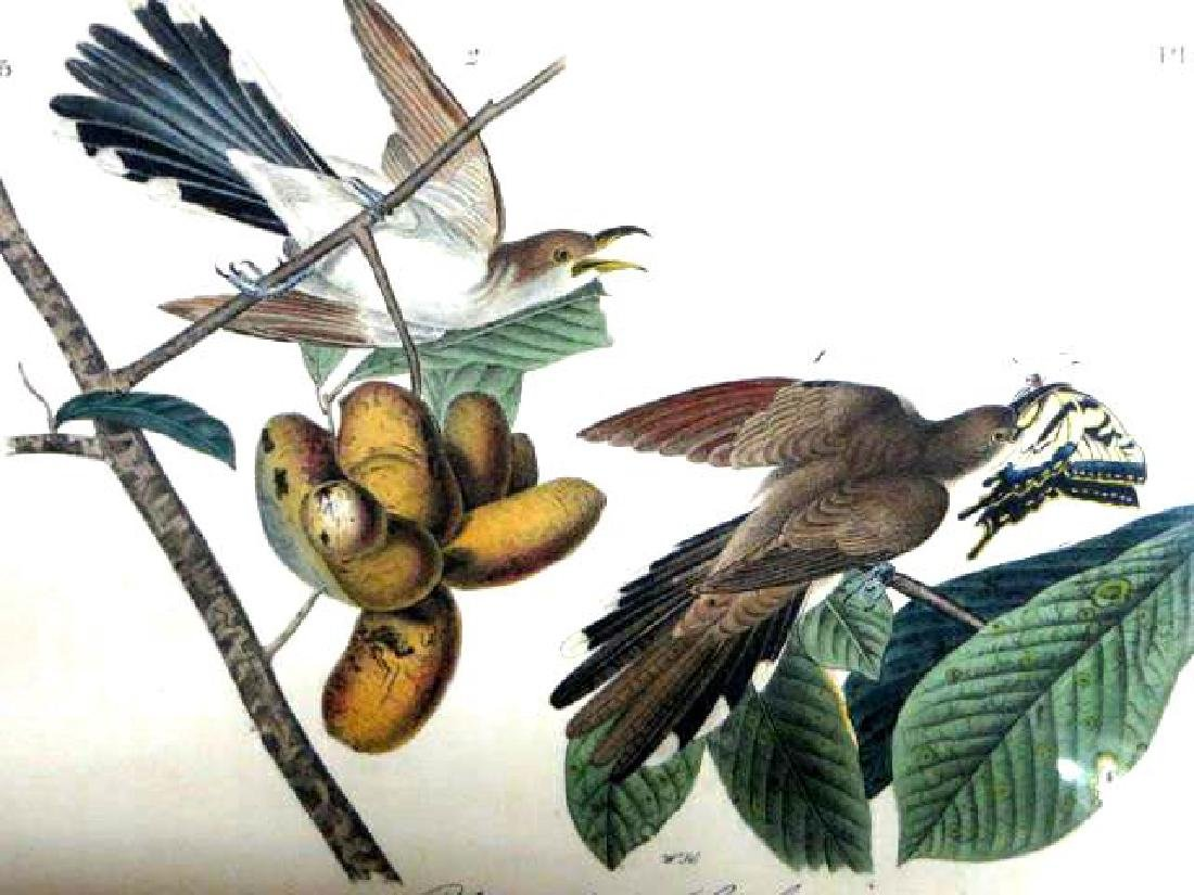 J.J. Audubon. Octavo. Yellow Billed Cuckoo No.275
