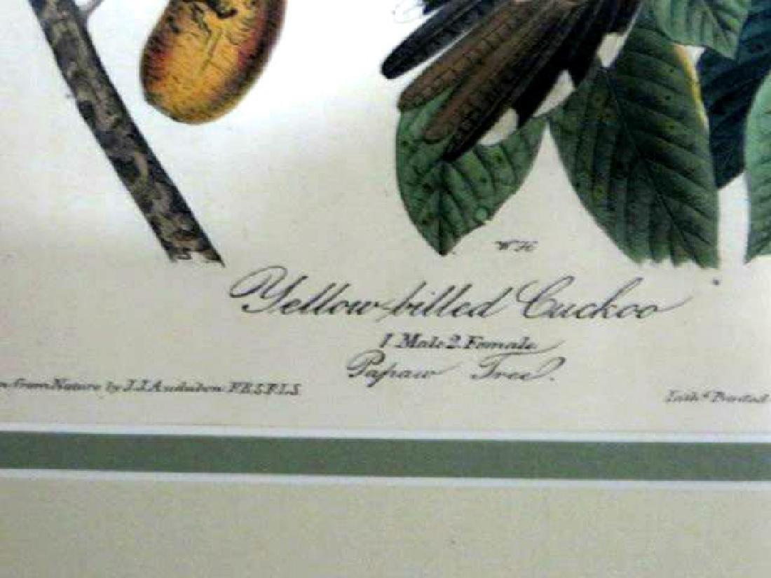 J.J. Audubon. Octavo. Yellow Billed Cuckoo No.275 - 2
