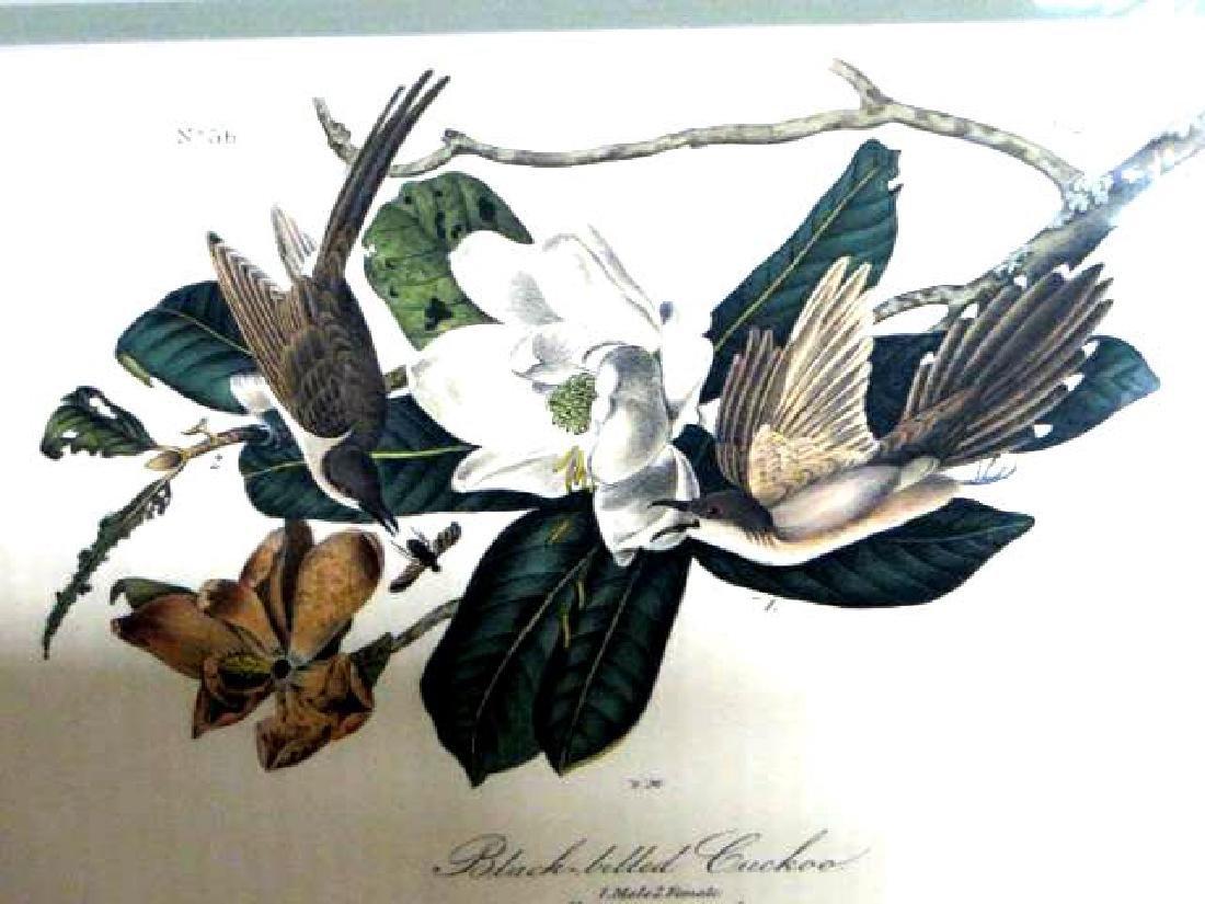 J.J. Audubon. Octavo. Blackbilled Cuckoo No.276
