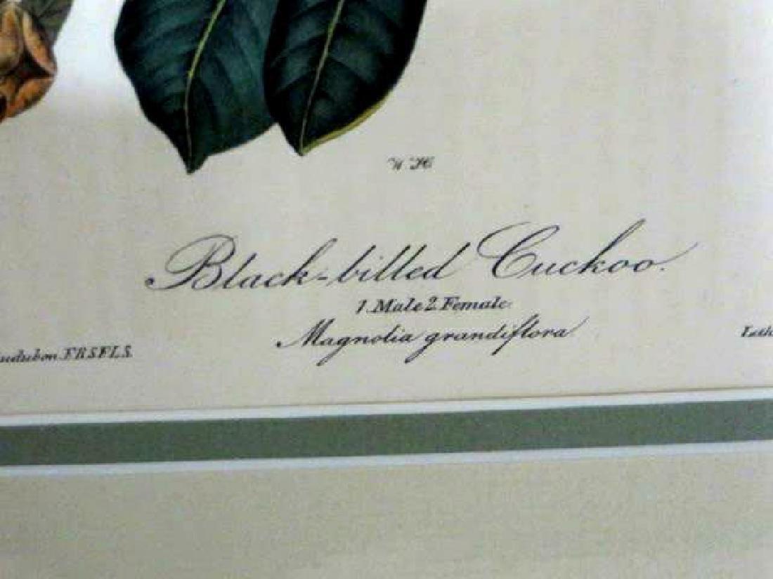 J.J. Audubon. Octavo. Blackbilled Cuckoo No.276 - 3