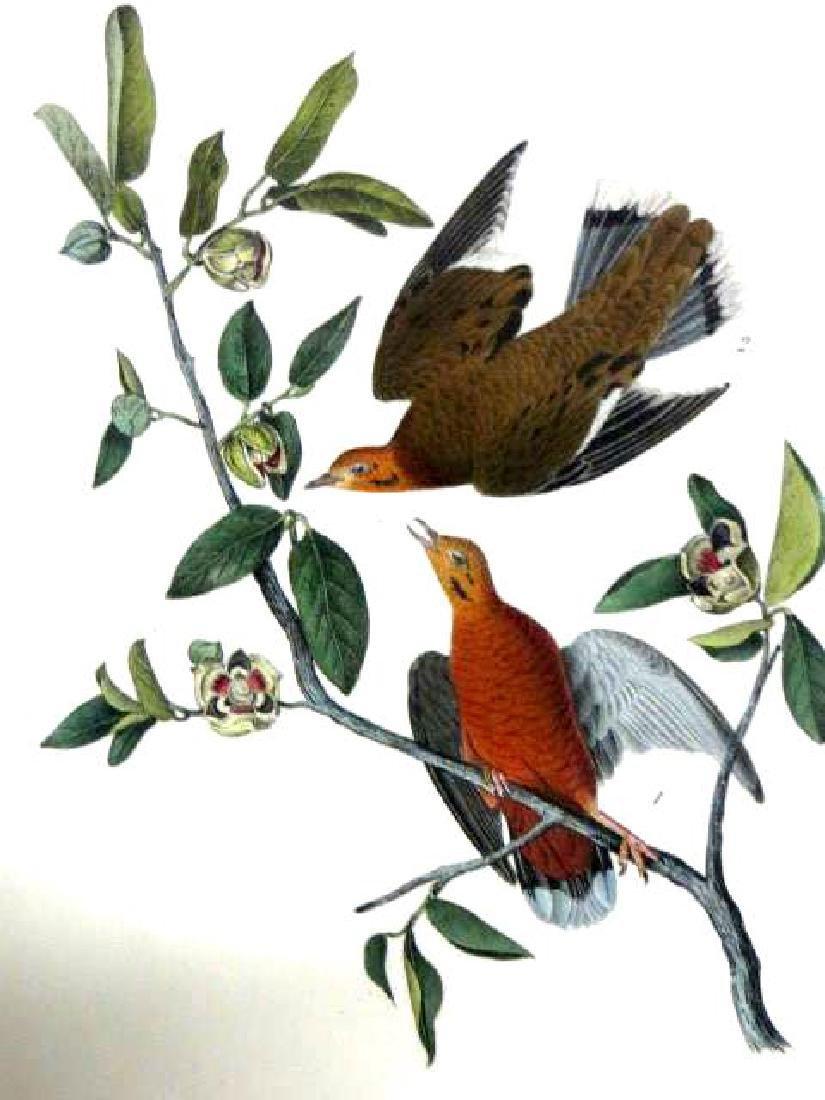 J.J. Audubon. Octavo. Zenaida Dove No.281