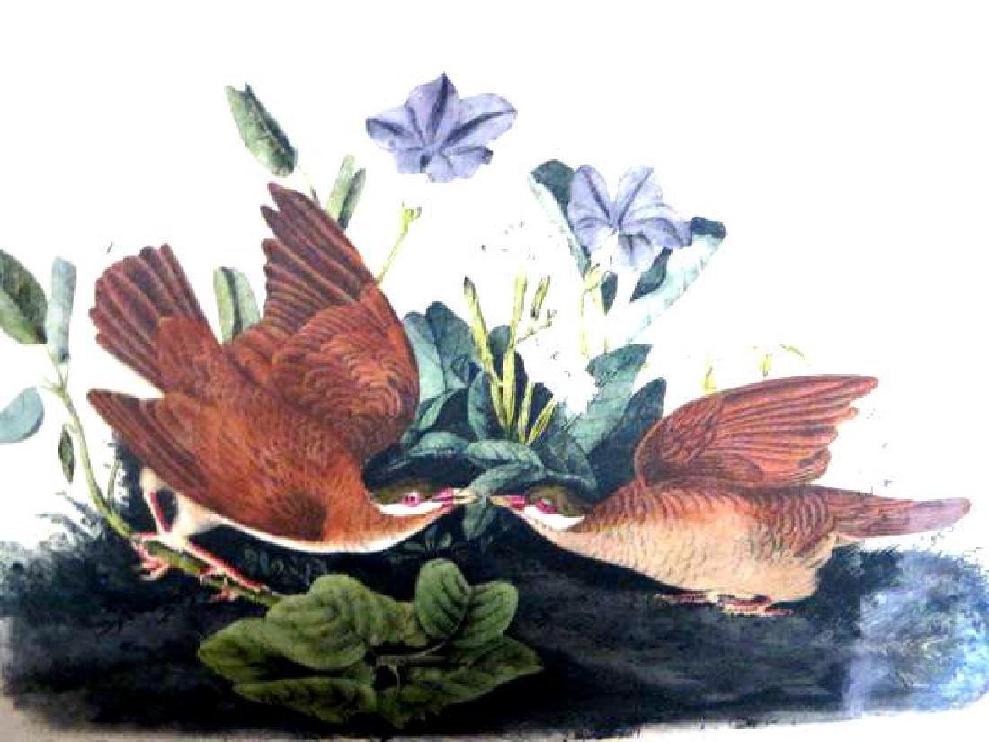 J.J. Audubon. Octavo. Key West Dove No.282