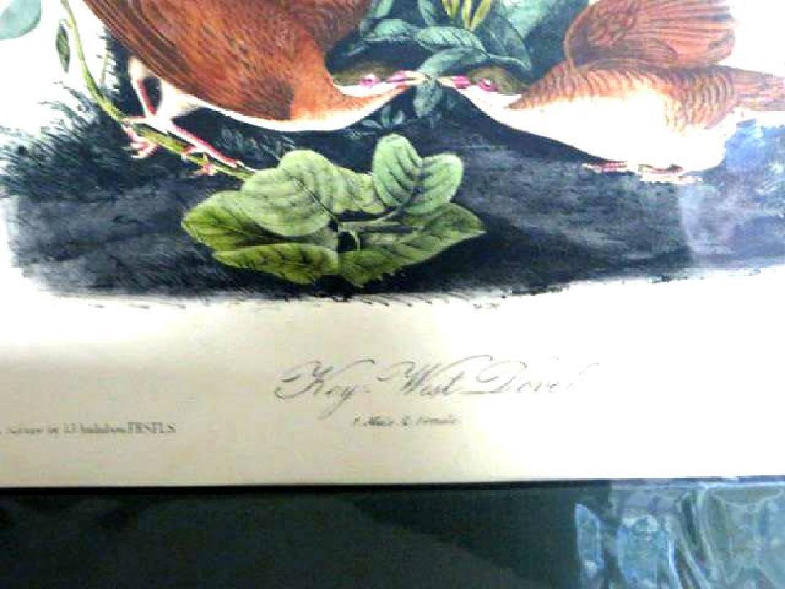 J.J. Audubon. Octavo. Key West Dove No.282 - 2