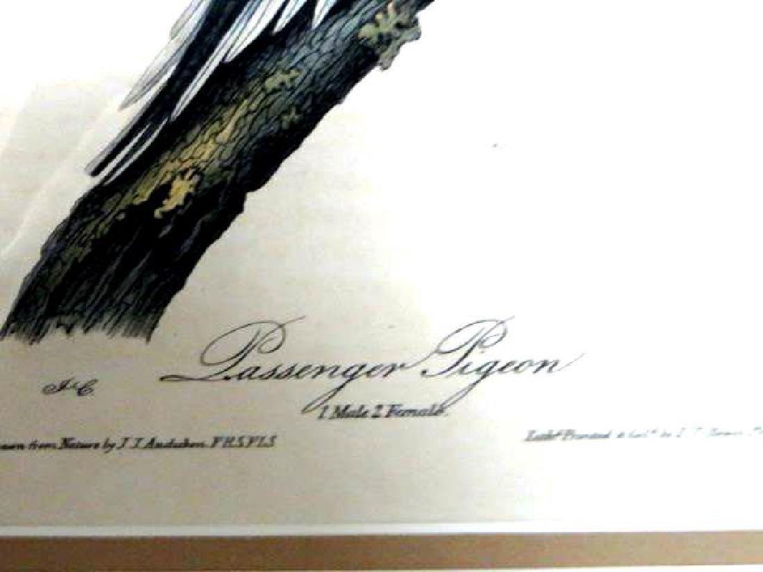 J.J. Audubon. Octavo. Passenger Pigeon No.285 - 2