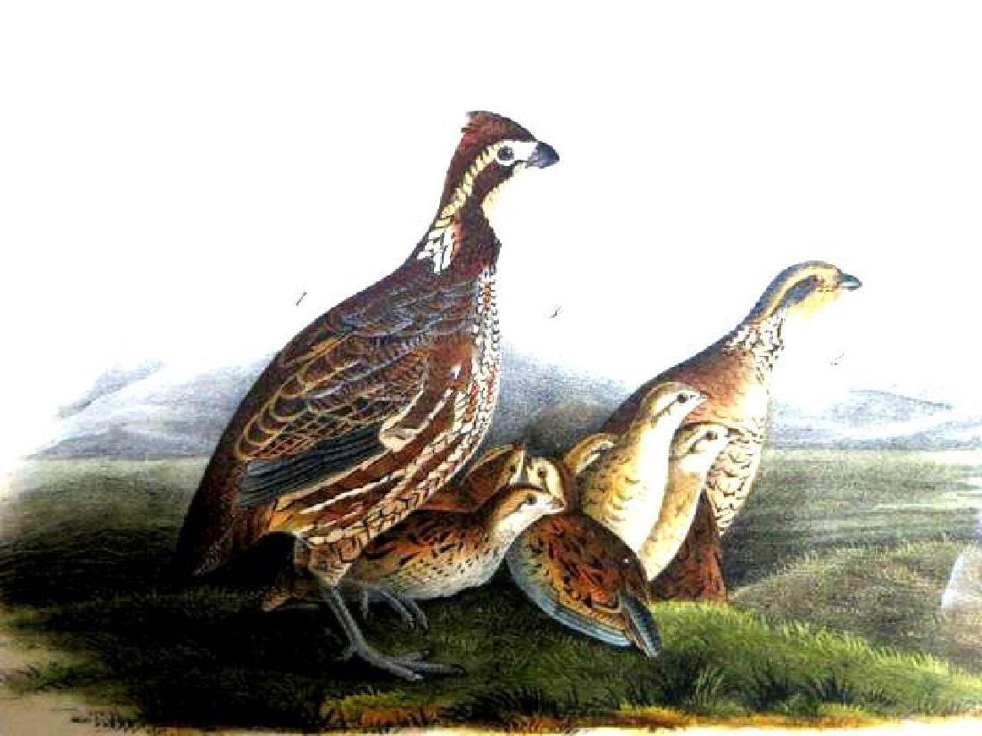 J.J. Audubon. Octavo. Common American Partridge No.289