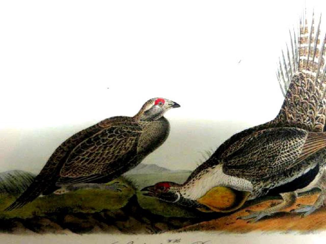J.J. Audubon. Octavo. Cock Of The Plains No.297