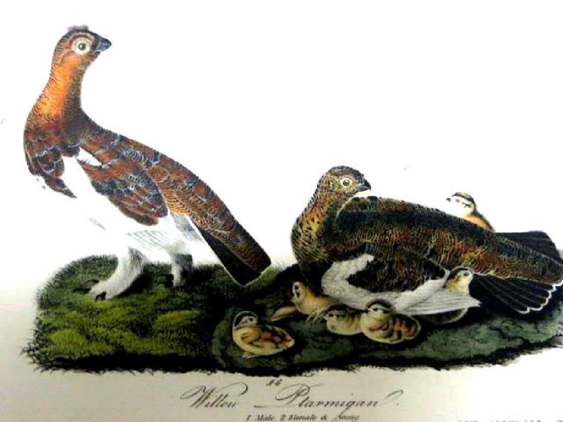 J.J. Audubon. Octavo. Willow Ptarmigan No.299