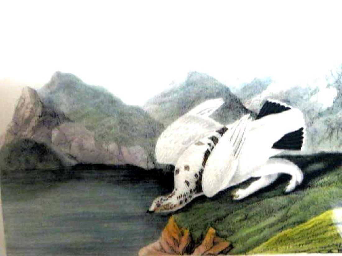 J.J. Audubon. Octavo. American Ptarmigan No.300