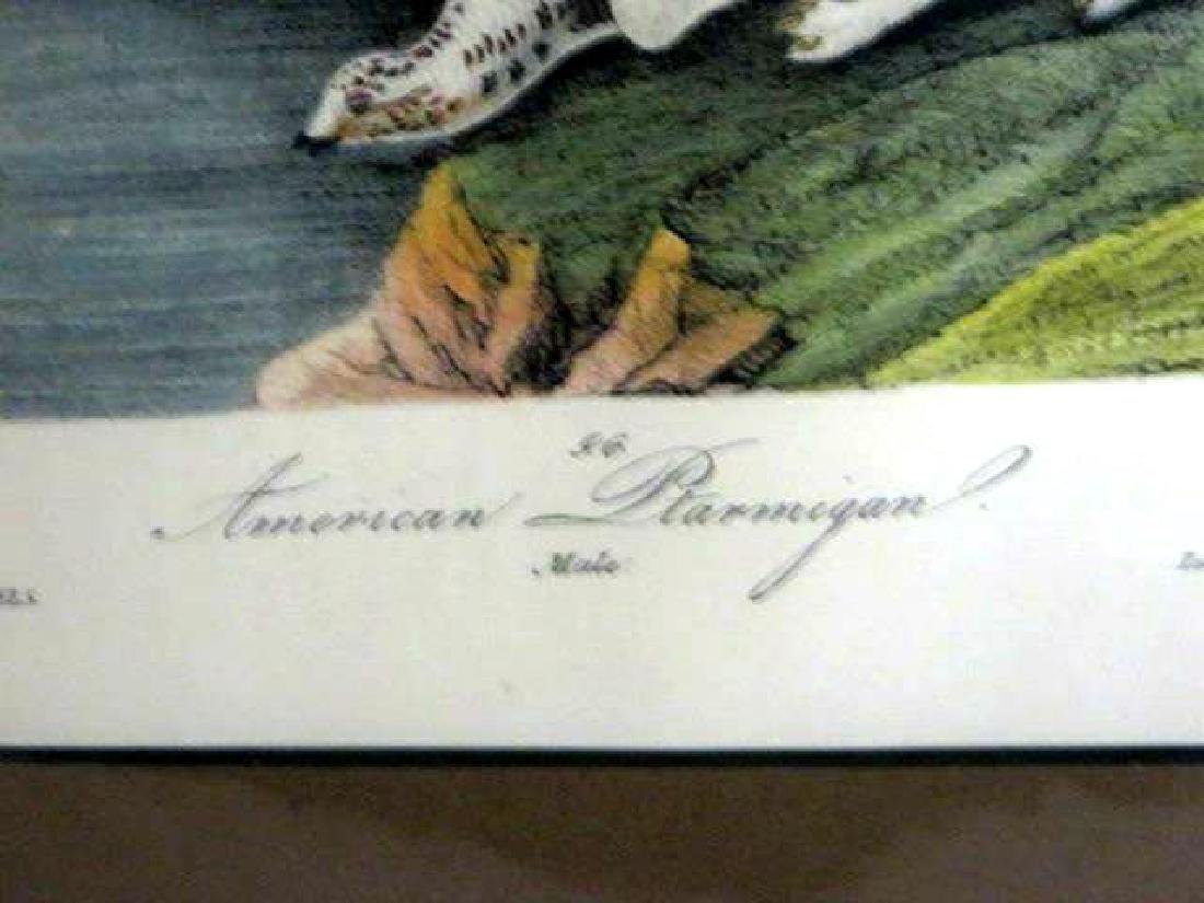 J.J. Audubon. Octavo. American Ptarmigan No.300 - 2