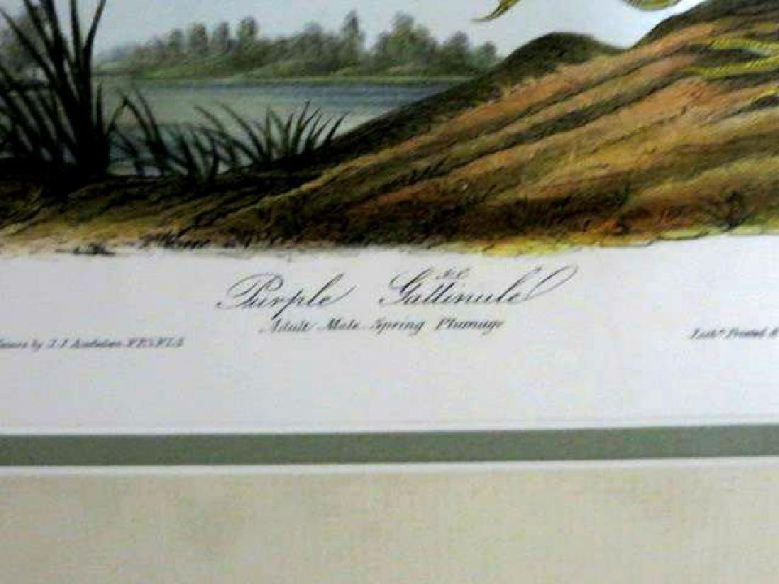 J.J. Audubon. Octavo. Purple Gallinule No.303 - 2