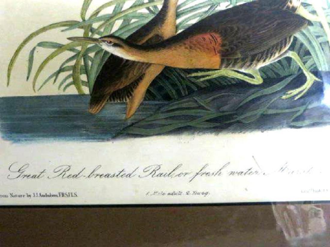 J.J. Audubon. Octavo. Great Red Breasted Rail or Fresh - 2