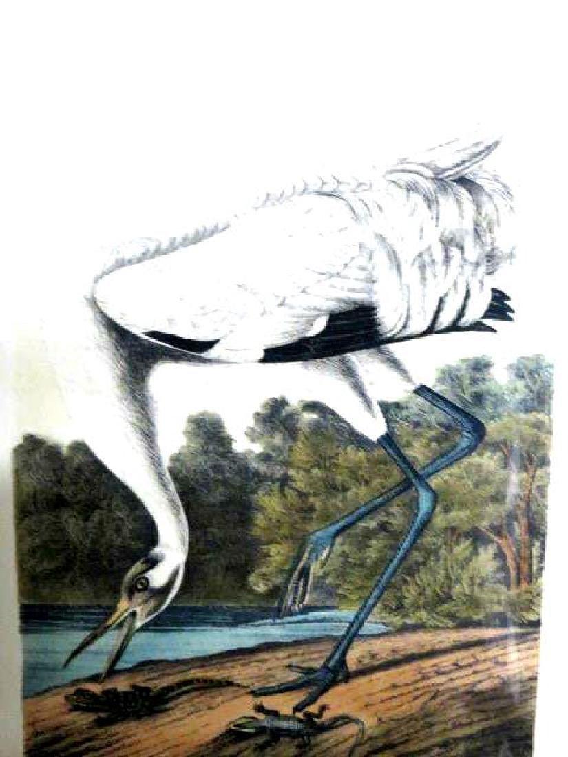 J.J. Audubon. Octavo. Whooping Crane No.313