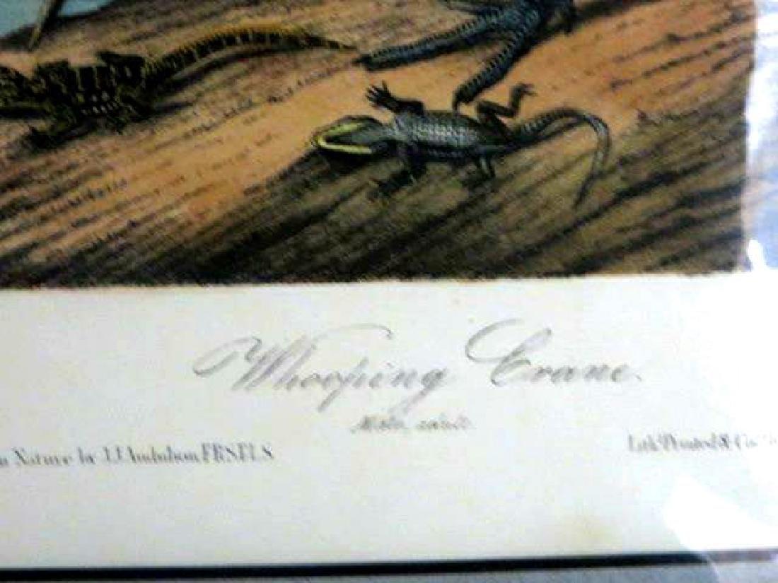 J.J. Audubon. Octavo. Whooping Crane No.313 - 2