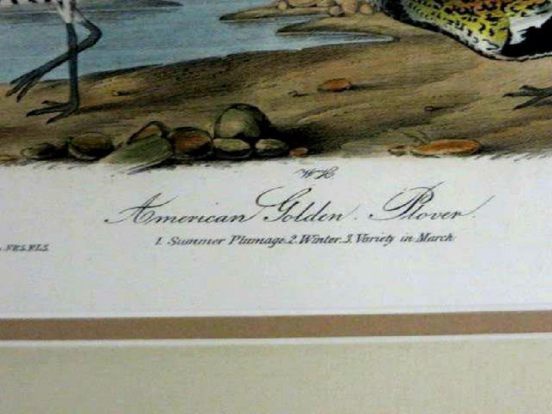 J.J. Audubon. Octavo. American Golden Plover No.316 - 2