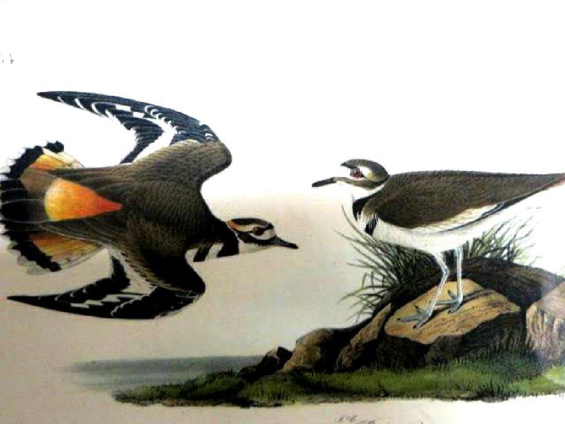 J.J. Audubon. Octavo. Kildeer Plover No.317