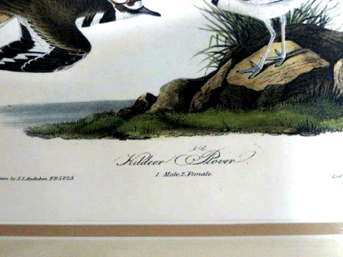 J.J. Audubon. Octavo. Kildeer Plover No.317 - 2