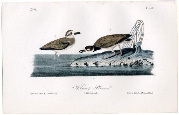 J.J. Audubon. Octavo. Rocky Mountain Plover No.318