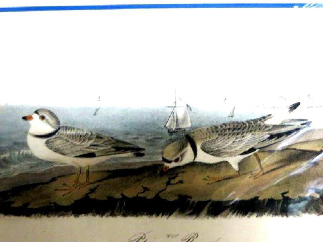 J.J. Audubon. Octavo. Piping Plover No.321