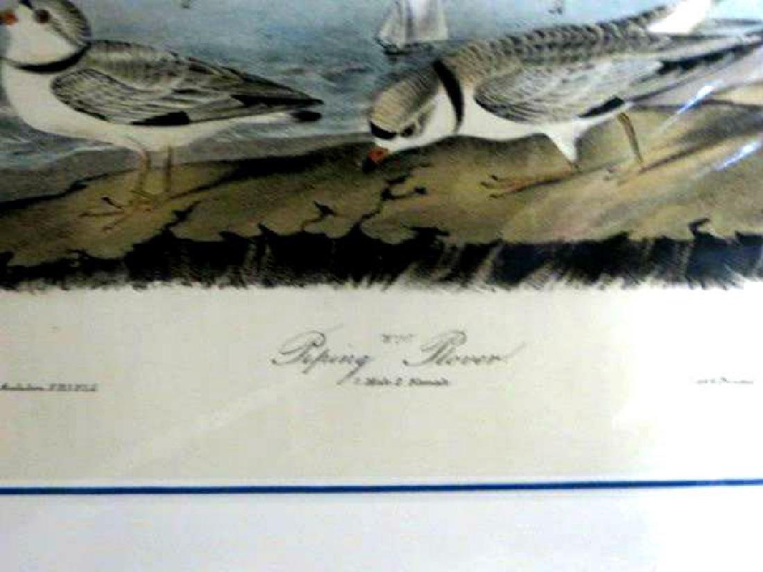 J.J. Audubon. Octavo. Piping Plover No.321 - 2