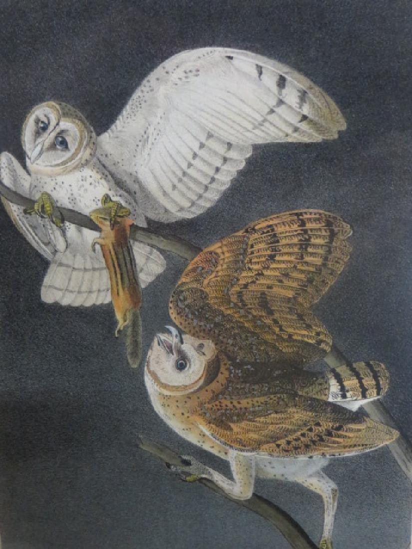 J.J. Audubon. Octavo. Barn Owl No.34