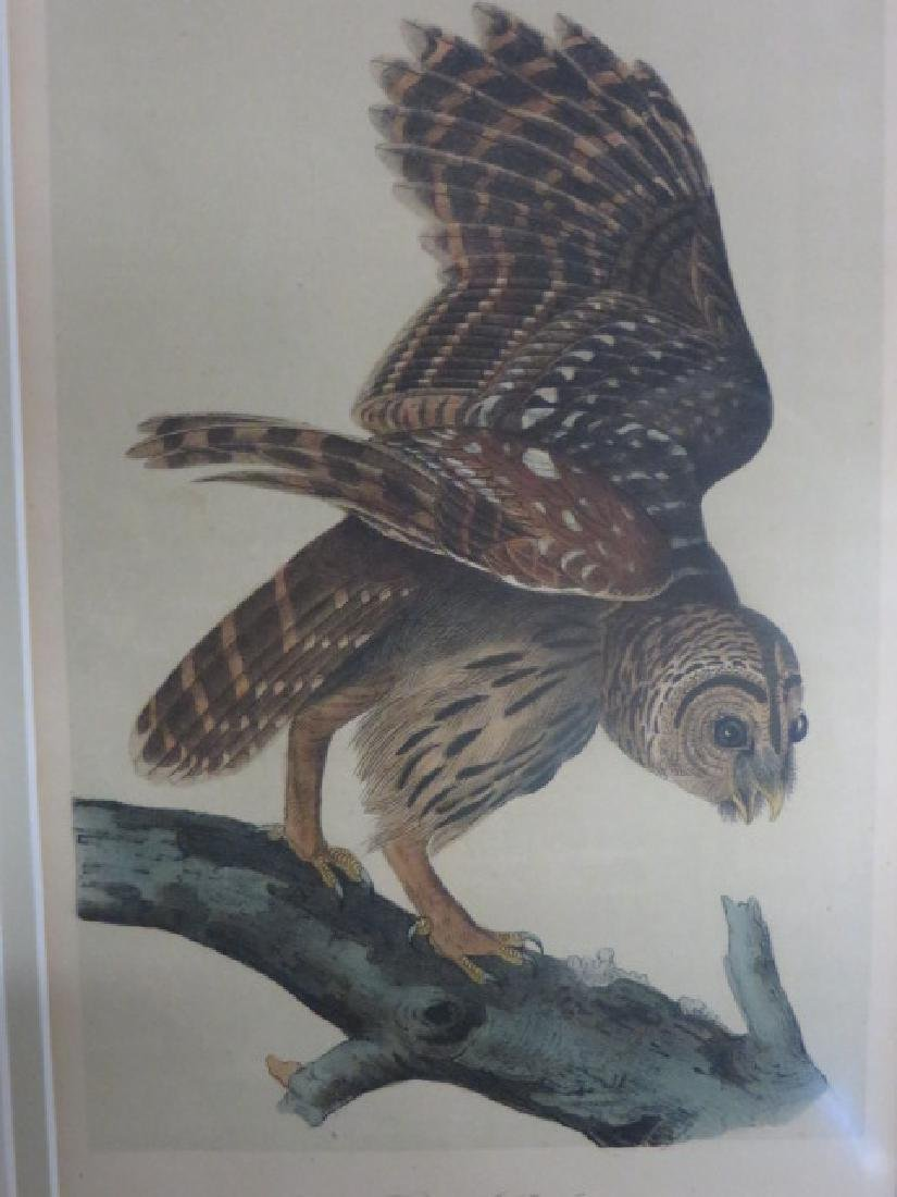 J.J. Audubon. Octavo. Barred Owl No.36