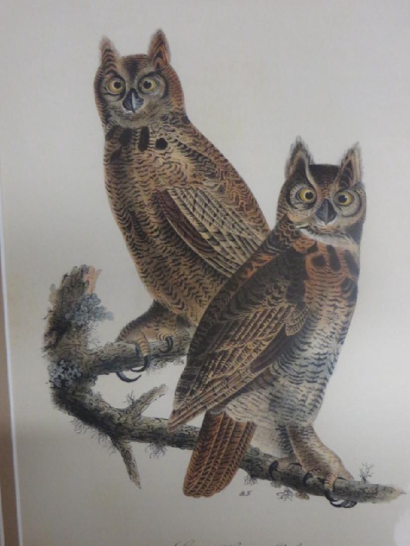 J.J. Audubon. Octavo. Great Horned Owl No.39