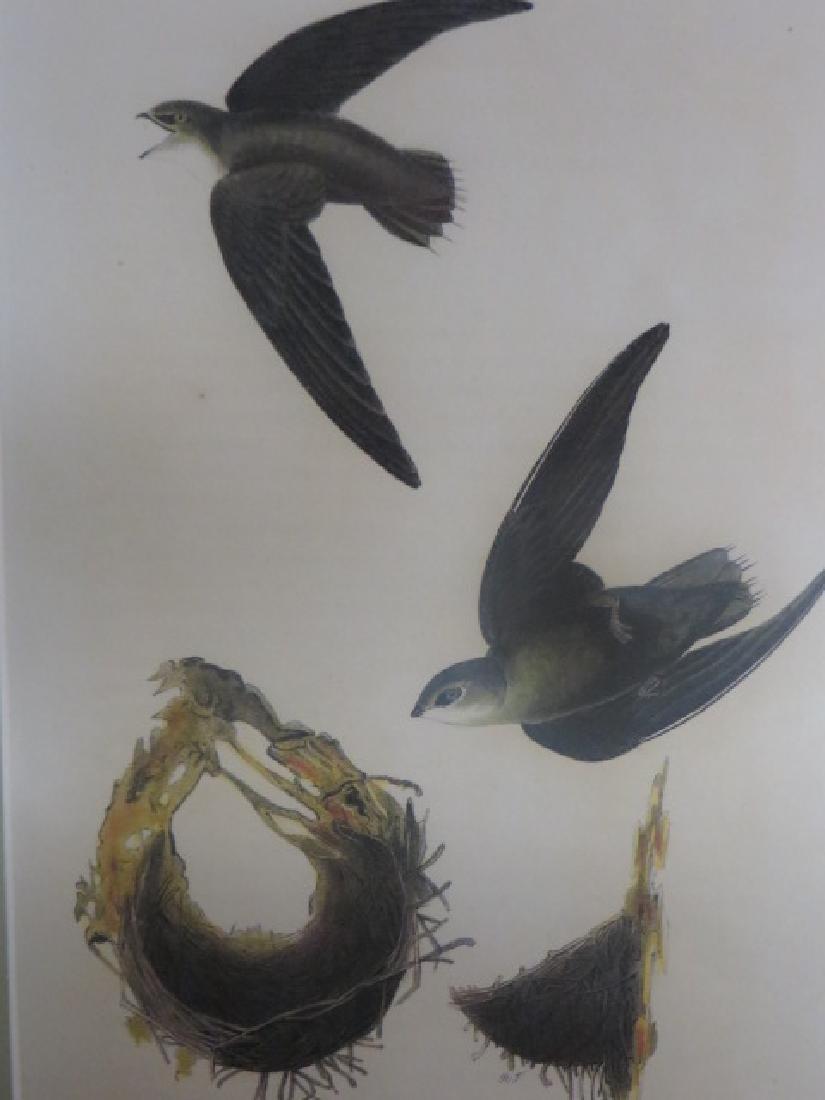 J.J. Audubon. Octavo. American Swift No.44
