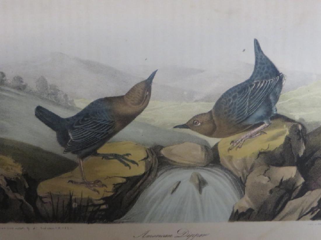 J.J. Audubon. Octavo. American Dipper No.137