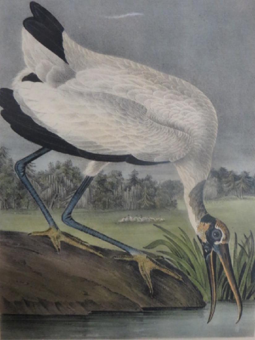 J.J. Audubon. Octavo. Wood Ibis No.361
