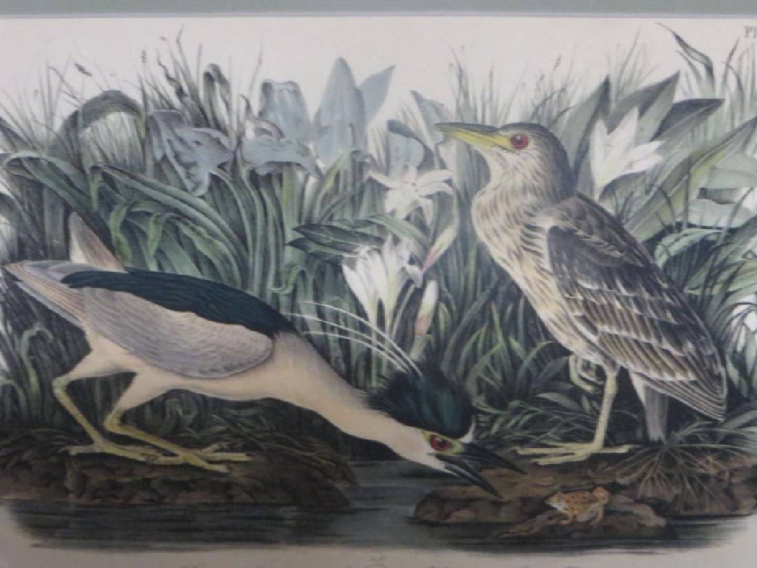 J.J. Audubon. Octavo. Black Crowned Night Heron No.363