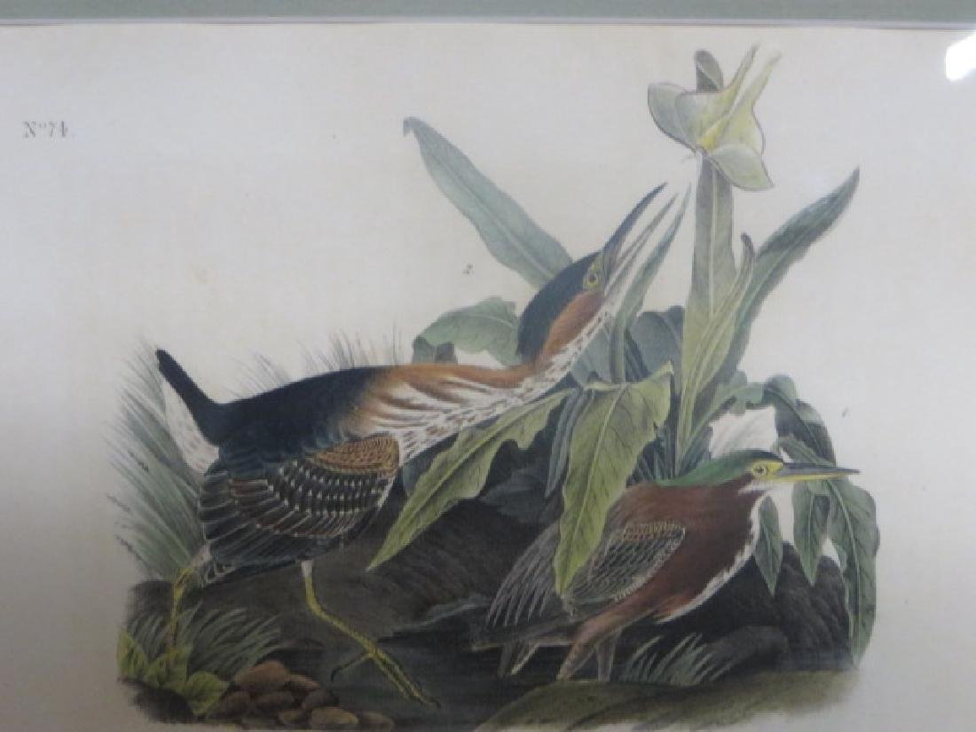 J.J. Audubon. Octavo. Gren Heron No.367
