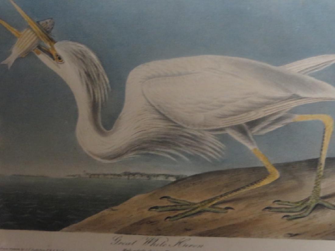 J.J. Audubon. Octavo. Great White Heron No.368