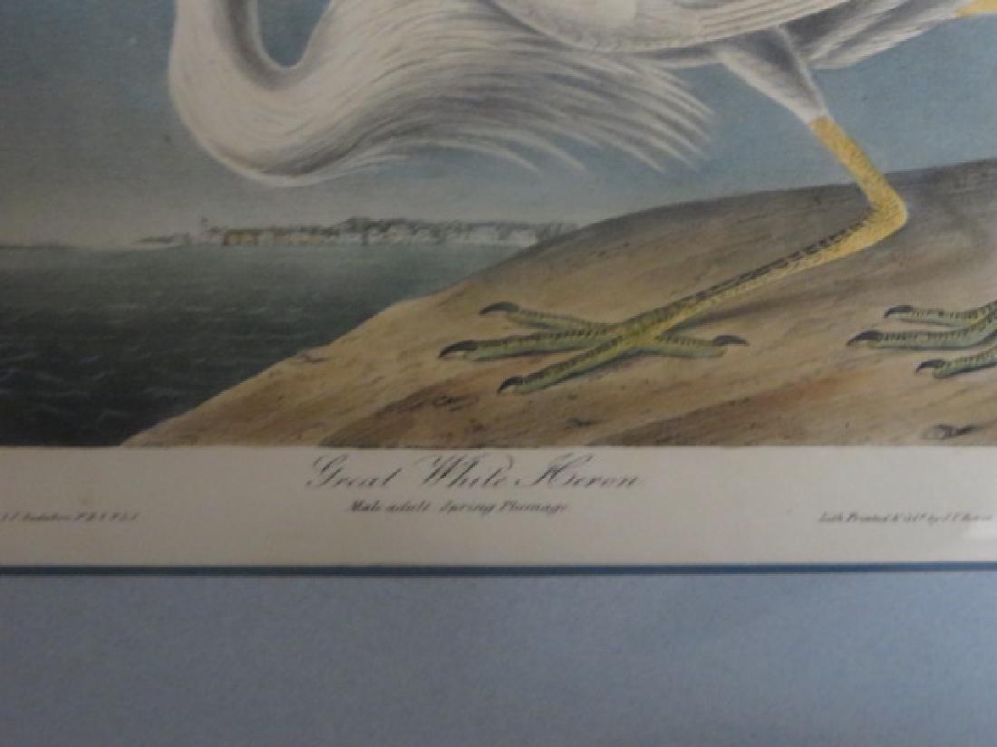 J.J. Audubon. Octavo. Great White Heron No.368 - 2