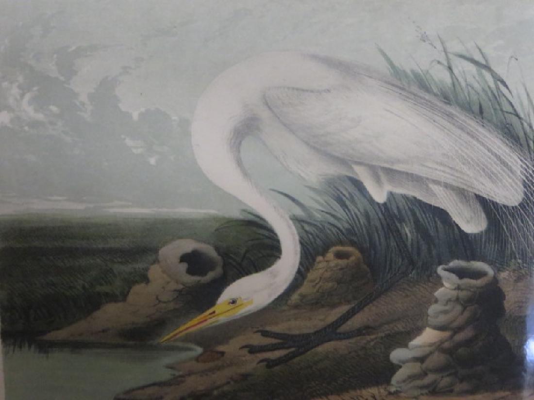 J.J. Audubon. Octavo. Great American White Egret No.370